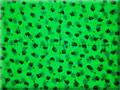 Grünfilter-Ansicht
